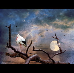 Stork Moon (h.koppdelaney) Tags: moon art nature water digital photoshop painting peace spirit magic great dream mother zen meditation metaphor mystic stork paradox symbolism meistereckhart impressedbeauty graphicmaster thepowerofnow scheinrealismus