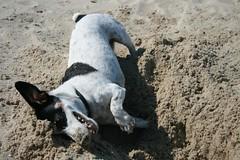 Just keep diggin' (ph3nom (BE)) Tags: sea beach strand milo nederland debanjaard