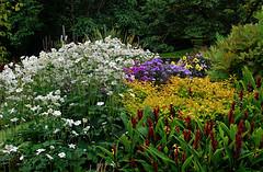 Lanhydrock_D8354 (Ennor) Tags: uk autumn flower garden geotagged flora cornwall unitedkingdom september nationaltrust 2009 dilo dayinthelifeof kernow lanhydrock autumnalequinox dilosep09 geo:lat=50441851 geo:lon=4699138
