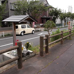 The bank of cherry at Mizumoto 02