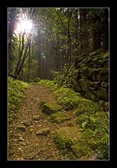 GUIDING LIGHT (Michael Halliday) Tags: wood autumn trees tree nature stone wall woods rocks allen path stones north highlights east foliage northumberland northumbria flare nationaltrust allenbanks