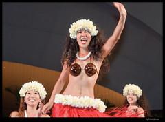 Hula_Waikiki_Shell_34