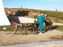 P9142003 (gvMongolia2009) Tags: mongolia habitatforhumanity globalvillage