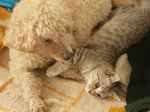 一日一貓狗,蛋友來稿:小正太與怪蜀黍的不倫BL之戀