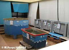 Tanques en el centro de recuperación de tortugas marinas de Lampedusa