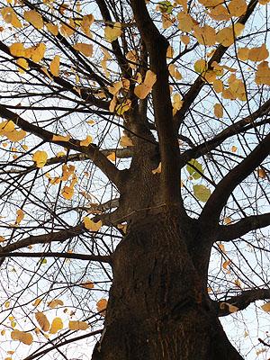 arbre pris par Paul.jpg