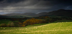 Before the rain... (Kenny Muir) Tags: clouds landscape moody sheep grazing dumfries galloway lowther a900