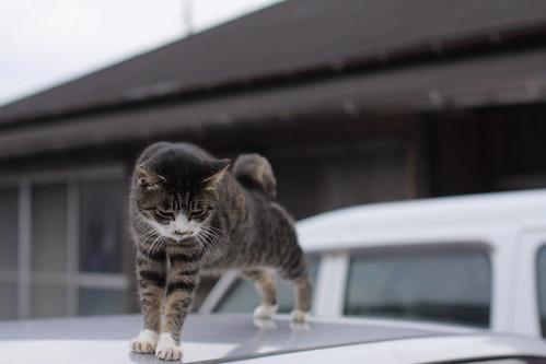 cat 1953