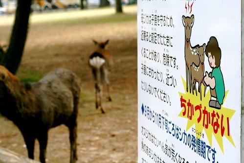 Deer!! OMG! Deer!