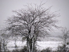 Winters Tree (texascowgirl35) Tags: snow tree nature weather texas ilovethistree