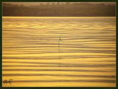 Stillness (IshtiaQ Ahmed revival to Photography) Tags: pakistan lake nature water flow waves great lifeform disturbed breathe stillness distracted islamabad donothing taketime banigala ishtiaqahmed