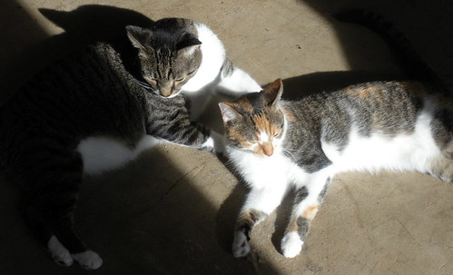 Johnny & Grace share a sunny spot