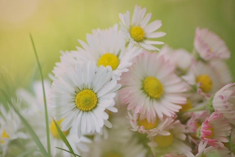 Kópia – kvet (2)