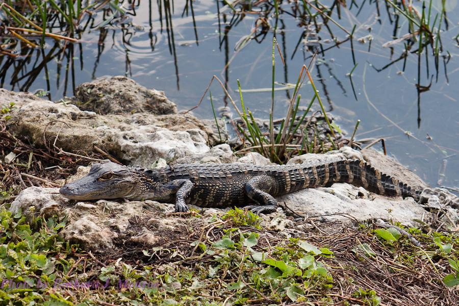 Everglades National Park (10 of 40)