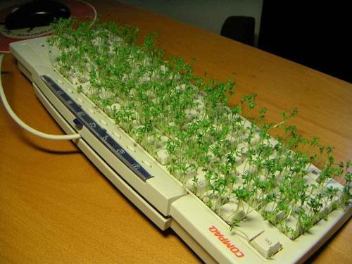 ماذا تفعل بجهاز الكمبيوتر القديم ....؟؟!! 3667694257_f731516335_o
