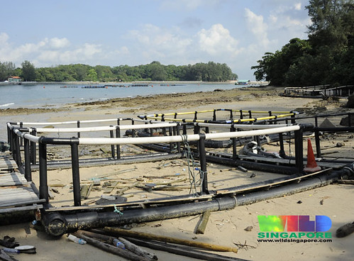 Fish farm equipment 'parked' on Lazarus Island?