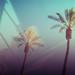 palms by Meganzii