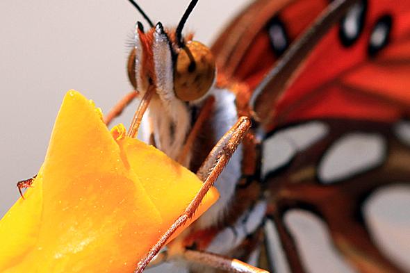 071809_butterfly02