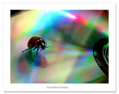 Mr. DJ  (Anuma S. Bhattarai) Tags: nepal music color disco crazy rainbow colorful asia dj cd creative july bugs jockey record ladybug kathmandu nepali anuma bhattarai 72lumixpanasonicdmcls70 anumabhattarai