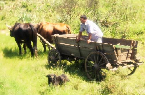 Carro de Boi e Colono