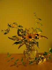 Still life with honeysuckle and sage (Juan_Sanchez) Tags: life dutch still sage bodegn salvia honeysuckle madreselva holands