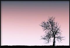 She was mine (brynmeillion - JAN) Tags: sky tree wales fdsflickrtoys bravo branches cymru karma ceredigion awyr coeden naturesfinest plasnewydd topshots brigau llandyfriog mywinners mywinner nikond80 brynmeillion freenature thesuperbmasterpiece natureselegantshots nikoond80 thebestofmimamorsgroups