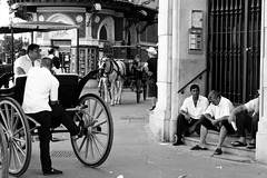 Siviglia (Matteo_Novara) Tags: bw horse men work bn riposo cavalli lavoro uomini siviglia quotidiano stanchezza carrozze finegiornata