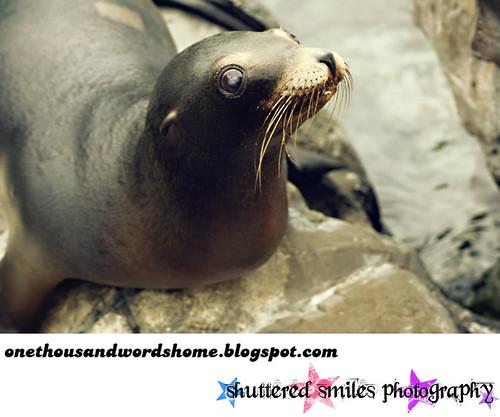 cute overload seal