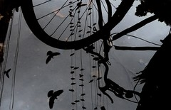 Wheel of karma (jmanj) Tags: city india birds reflections pigeons streetphotography cycle baroda vadodara urbanindia johannesmanjrekar