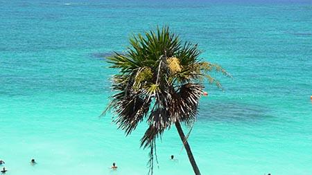 palmier tulum.jpg
