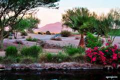 Phoenix, Arizona (facebook.com/agsjavierphotography) Tags: arizona cactus mountain phoenix twilight jwmarriott