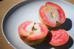 Apple? (Enjoy Patrick Responsibly) Tags: apple fruit weird nikon nikkor eater d300 redapple pinkpearl weirdfruit 50mmf18af pinkpearlapple