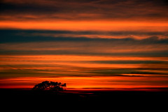 Evening Sky (The Lensman, Bala) Tags: red sky orange cloud tree clouds evening horizon ooty blueribbonwinner platinumphoto nouvellephotography