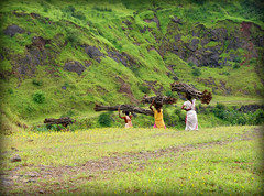 Carrying fuel ... (Prashhant) Tags: wood india women pune woodcutter sakal raireshwar pcaoddone