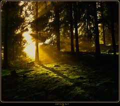 Erbland - morning sun again (NPPhotographie) Tags: wood morning sun mist tree art fog forest sunrise germany creative dust oberberg naturea abigfave platinumphoto platinumsuperstar vanagram bestcapturesaoi elitegalleryaoi