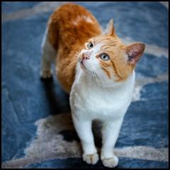 Eyes Cat (Pilar Azaña Talán ) Tags: españa look cat spain eyes girona ojos gato mirada cataluña cadaqués thesuperbmasterpiece pilarazaña