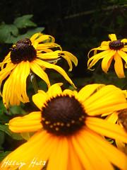Look beyond (hillary hal3) Tags: flowers summer moms