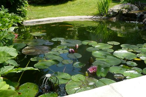 Visite jardins Fontenay juin 2009