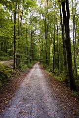 Path in the wood (bold.) Tags: road street wood sky tree green forest canon geotagged deutschland eos grey path himmel grau m grn blatt wald bltter baum 1740mm deu weg badenwrttemberg strase ef1740mmf40lusm badenwrttemberg 40d mnsheim badenw mnsheim geo:lat=4886002300 geo:lon=884968000 deutschlandleaf