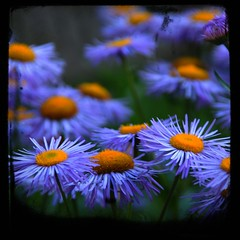 Last summer... (unlimited inspirations) Tags: world life travel flowers blue summer plants baby macro green art texture love nature floral beautiful beauty yellow garden landscape fun lights switzerland design petals spring nikon flickr colours dof view angle blossom sweet bokeh earth swiss models romance best daisy bloom colourful pollen sunlights hbw nikond80 unlimitedinspirations mygearandmepremium mygearandmebronze mygearandmesilver mygearandmegold mygearandmeplatinum mygearandmediamond artistoftheyearlevel3 artistoftheyearlevel4 aboveandbeyondlevel4 aboveandbeyondlevel1 artistoftheyearlevel5 aboveandbeyondlevel2 aboveandbeyondlevel3 rememberthatmomentlevel4 rememberthatmomentlevel1 rememberthatmomentlevel2 rememberthatmomentlevel3 rememberthatmomentlevel7 rememberthatmomentlevel5 rememberthatmomentlevel6 vigilantphotographersunite vpu2 vpu3 vpu4 vpu5 vpu6 vpu7