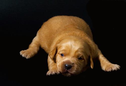 cucciolo 2