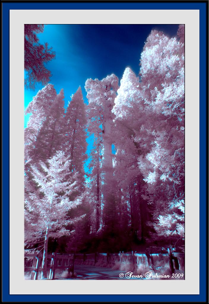 IMAGE: http://farm3.static.flickr.com/2600/4132563484_3c0ebb9b8d_o.jpg