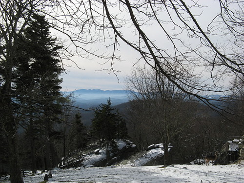 Grandfather Mountain vista