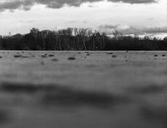 (Christian Güttner) Tags: landschaft tyskland landscapes landscape heaven himmel germany niemcy czarnobiale monochrome mediumformat mittelformat moerschecodeveloper 6x45 120 europa etrs ecodeveloper eis zenzabronica outdoor ilford ilforddelta400pro umwelt ufer utter rollfilm krajobraz horizont film deutschland svartvitt schwarzweis schwarzweisfotografie sw analog analogue blackandwhite bw natur nrw nature natura niebo