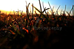 grass and sunset (Frivolous Photography) Tags: grass sun sunset sunsetphotography orangesun novice novicephotography unedited pure raw nofilter noedit straightfromthecamera firsttry macro macrophotography amaturemacro photography amaturephotography amature canonphotography canon canoneos1300d natural eastsussex beautiful colour canoneos countryside closeup dslr dslrphotography duskphotography dusk england englishspringtime englandflowers lewes flowerphotography flowers flicker field shaddow light silhouette simple sky nature springflowers sussex youngphotographer