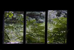 Art is the window to man's soul... (Lin Gregory (Light-Worker)) Tags: fern art window woodland kent soul woodshed bedgebury bedgeburyplantswindowwoodland