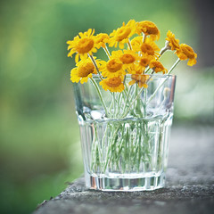 Vintage Flowers (Giulia Torra) Tags: flowers colour glass yellow canon vintage square eos 350d 50mm colore bokeh giallo fiori vignetting ef50mmf18ii bicchiere quadrato sfocato vignettatura