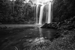 King King Falls- Ok, so it's Whangarei Falls really (Ashley Daws) Tags: whangarei falls waterfall waterfalls water lake pond stream river rock cliff bw black white bush tree king kong new zealand canon 40d singh ray varinduo nd filter long exposure