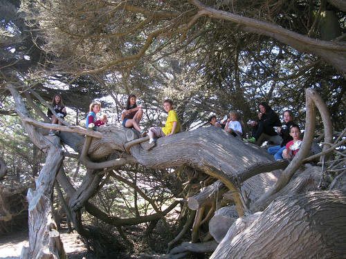 Some Thoughts on #28 – Climb a Tree | 50 Dangerous Things