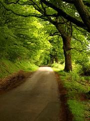 A Lane in cornwall (saxonfenken) Tags: trees hedges lanes roads green cornwall june2009 superhero bigmomma yourock1st thumbsup herowinner explore motif thechallengefactory 315 game pregamesweepwinner pregamewinner storybook